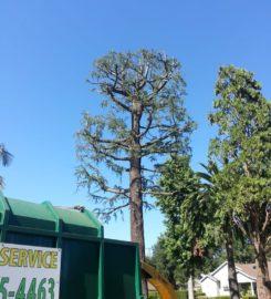 Octavio's Tree Service & Stump Grinding